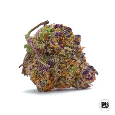 Purple Glam Kush Auto Fem