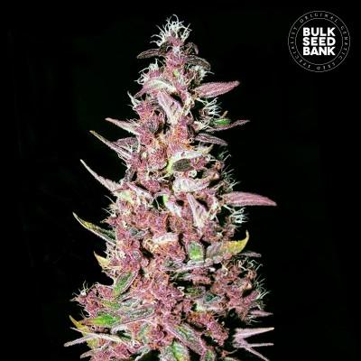 Купить семена Purple Glam Kush Fem