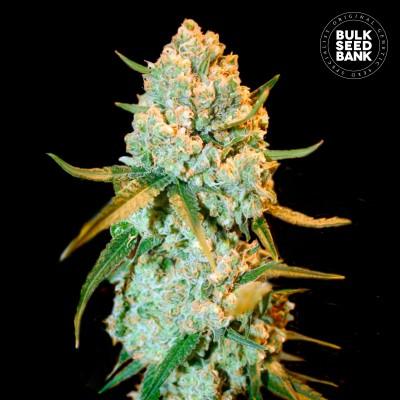 Купить семена Special Crystal Haze Fem