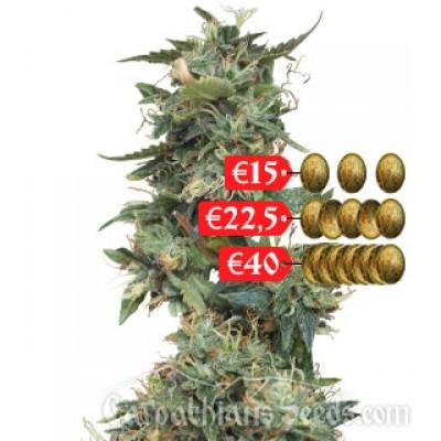 Купить семена AK Auto Fem
