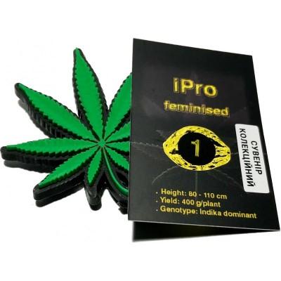 Купить семена iPro Fem
