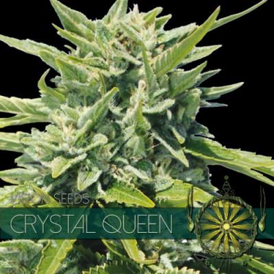 Купить семена Crystal Queen Fem