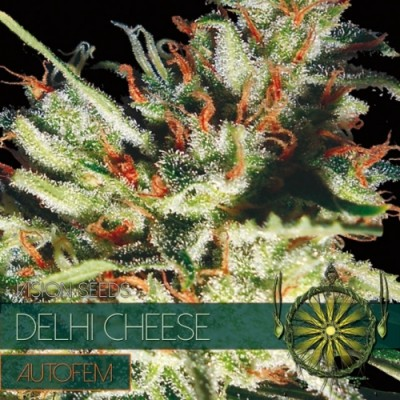 Delhi Cheese Auto Fem