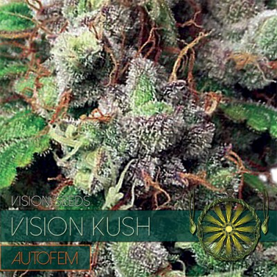 Купить семена Vision Kush Auto Fem