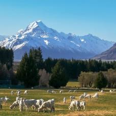 Новая Зеландия обеспокоена шансами легализации в 2020 году