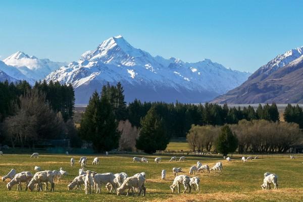 Новая Зеландия обеспокоена шансами легализации каннабиса в 2020 году