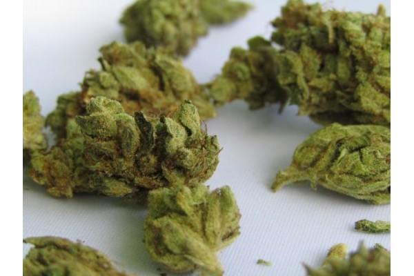 Как вырастить более крупные шишки марихуаны: 7 основных советов и методов по выращиванию марихуаны