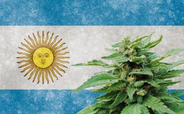 Аргентина: на шаг ближе к отраслям медицинской марихуаны