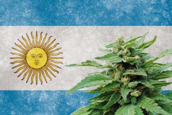 Аргентина: на шаг ближе к регулируемым отраслям медицинской марихуаны после одобрения Сенатом
