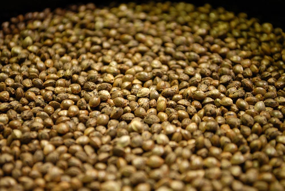 Сколько хранятся семена марихуаны книги для выращивания конопли